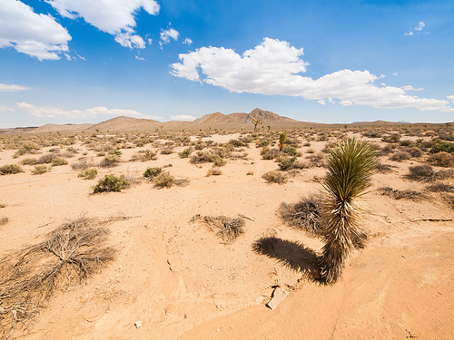 Desert Survival Desert Survival: Seven Tips to Save Your Life